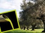 olio Olivi